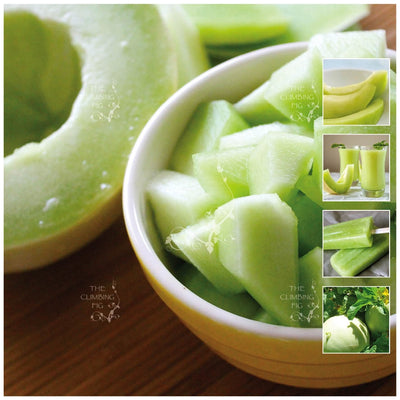Melon Green Bailan Honeydew Seeds