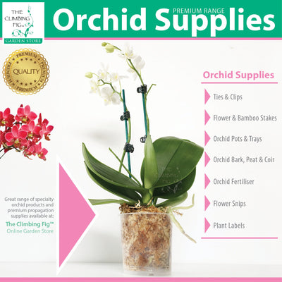 The Climbing Fig Orchid Supplies Range