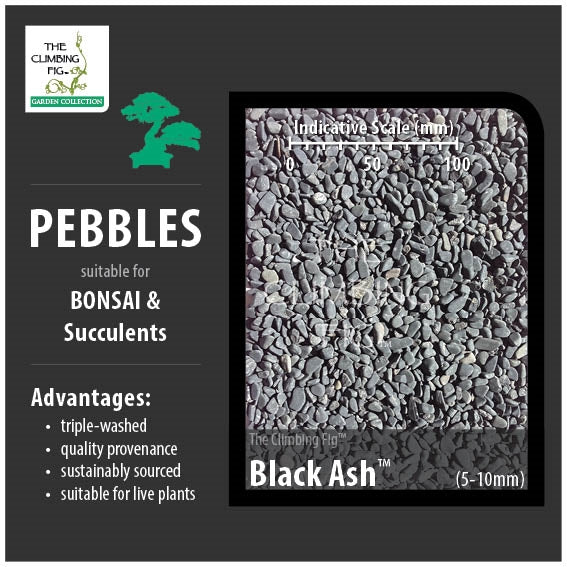 Black Ash 5-10mm Decorative Pebbles. Washed for Bonsai, Succulents & Terrariums