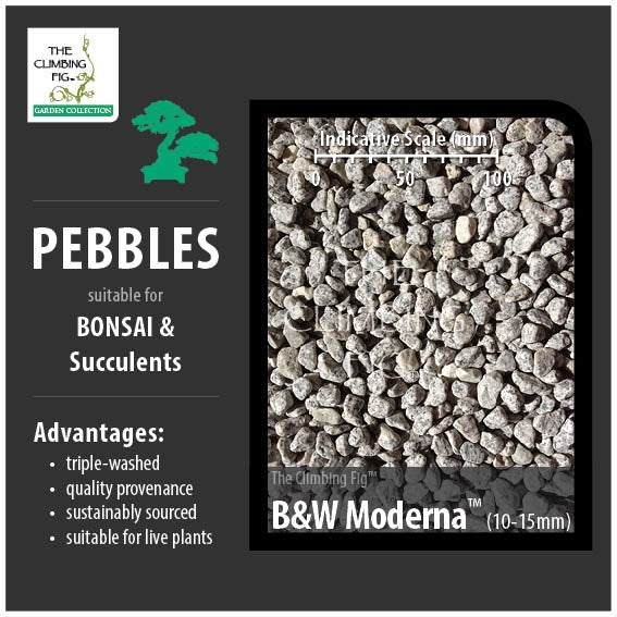 B&W Moderna 10-15mm Decorative Pebbles. For Bonsai, Succulents & Terrariums