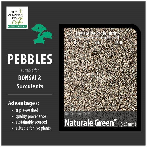 Naturale Green 5mm Decorative Pebbles. For Bonsai, Succulents & Terrariums