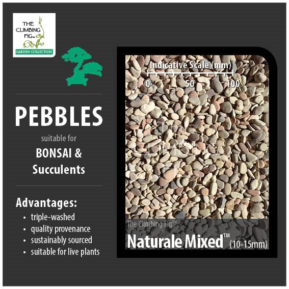Naturale Mixed 10-15mm Decorative Pebbles. For Bonsai, Succulents & Terrariums