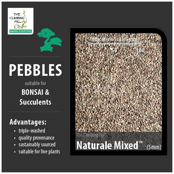 Naturale Mixed 5mm Decorative Pebbles. For Bonsai, Succulents & Terrariums