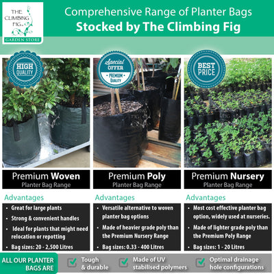 The Climbing Fig Planter Bags Range