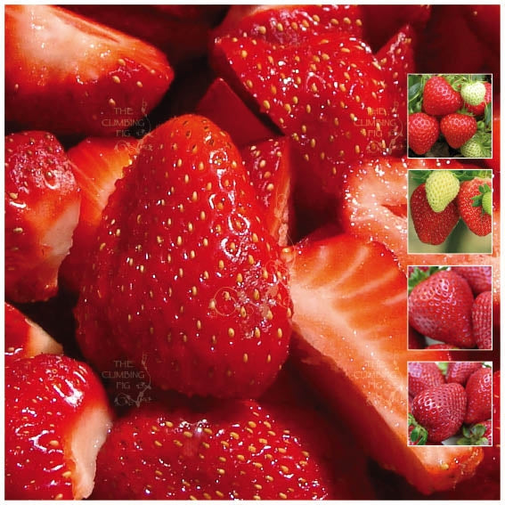 STRAWBERRY Sweet Temptation Seeds. Heavy yield. Modern sweetheart variety