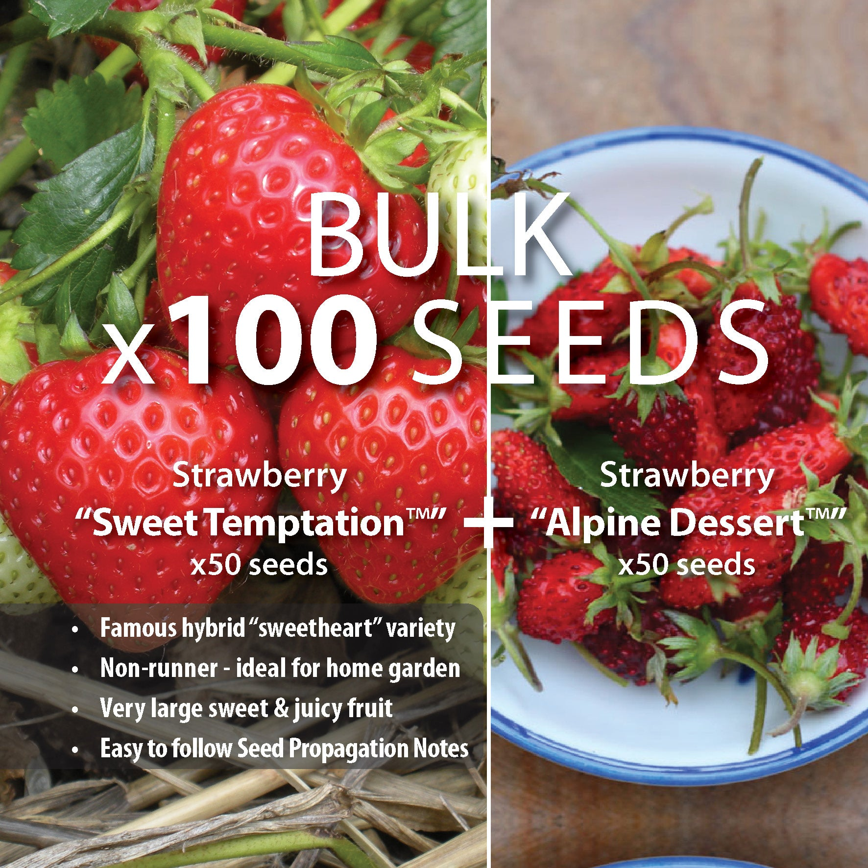 STRAWBERRY BULK Temptation Pack x100 Seeds. Heavy yielding, 2 great varieties