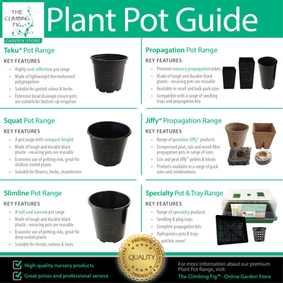 The Climbing Fig Plant Pot Guide