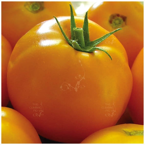 Tomato Yellow Grosse Lisse Seeds