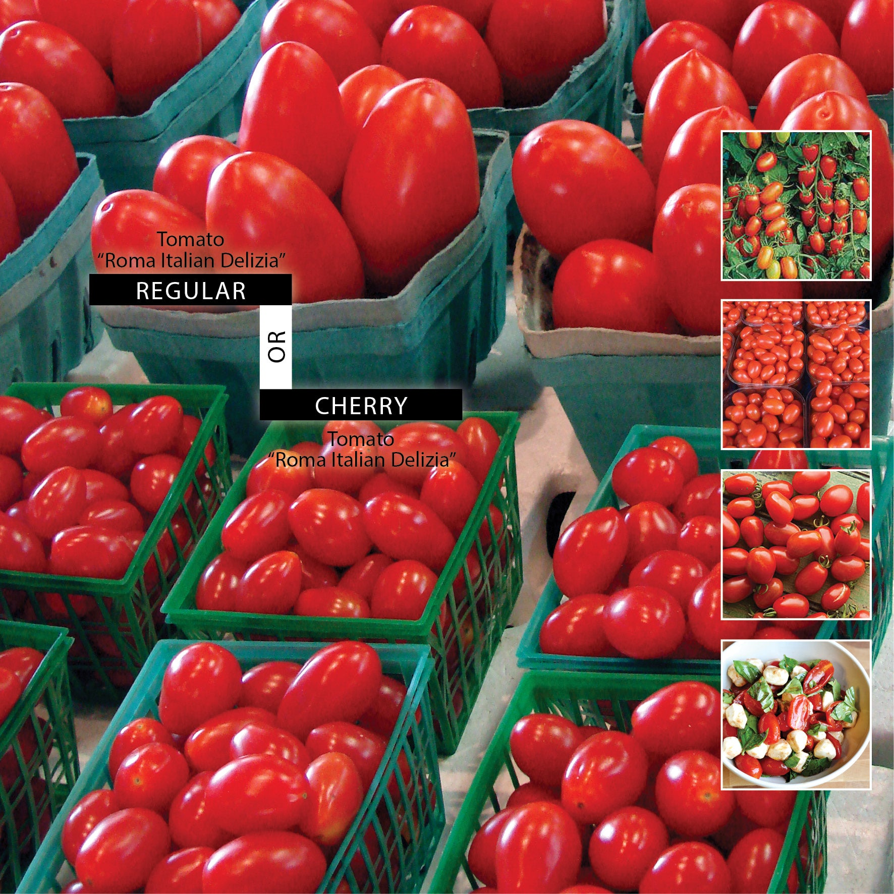 TOMATO Roma Italian Delizia Seeds. Regular or Cherry sized fruit option