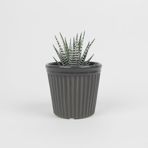 Estrid grey pot
