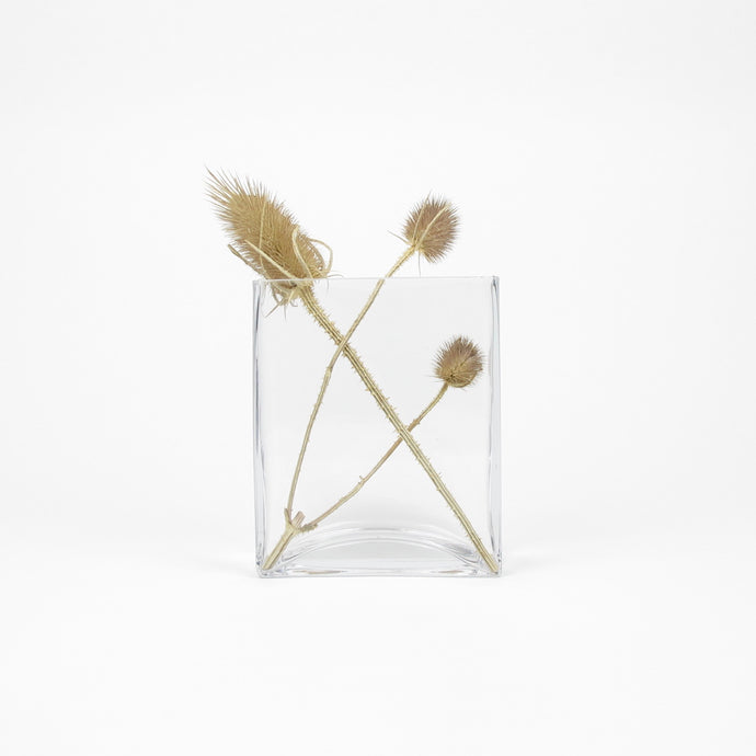 Teasels in square glass