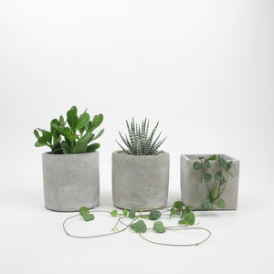 Trio of small plants