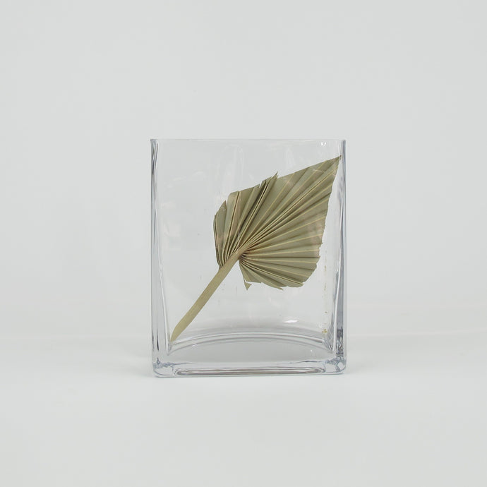 Palm in square glass
