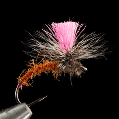 Fiery Brown Klinkhamer Special Ken Maylor with pink post