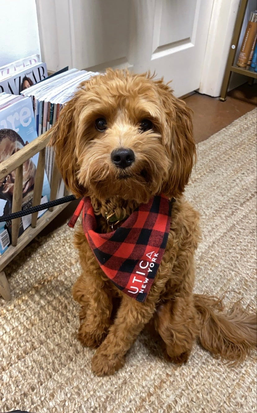 Utica Black and Red Plaid Dog Bandana (small dogs)