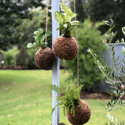 KOKEDAMA WORKSHOP 29.03.20 Sunday 2pm-4pm