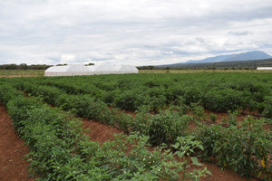Kilimo Gardens (K-farm) - Kajiado County - Plot J196, KJD/LORNGOSUA/7909, Area(HA) 0.045 - OPTIVEN