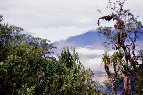 Stephen Williams – Writer of fiction. Levani Valley view from mountain track, Southern Highlands Province, PNG