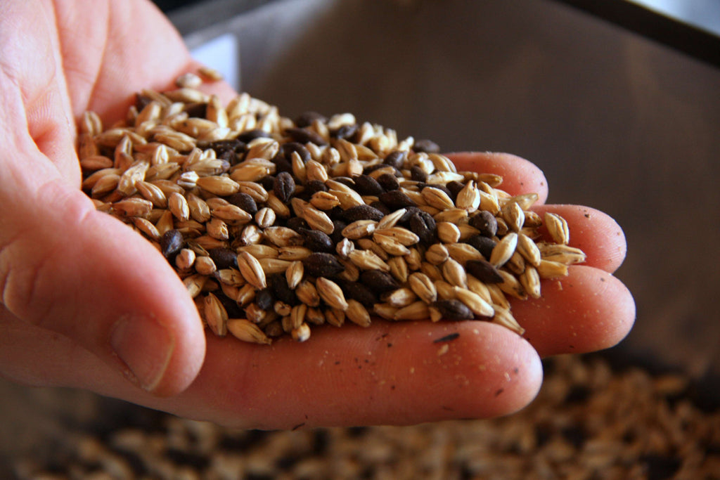 whole malted barley