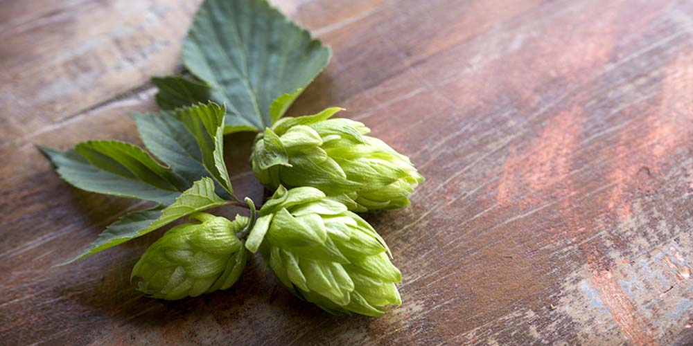 Beer - Imported Hops