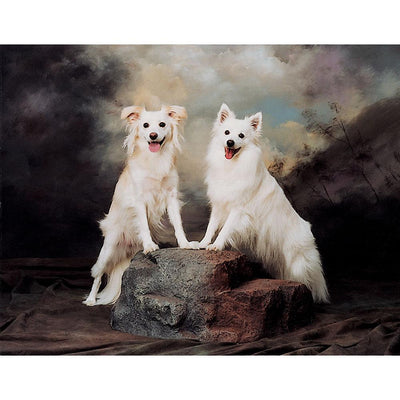 Rock Formation Dogs