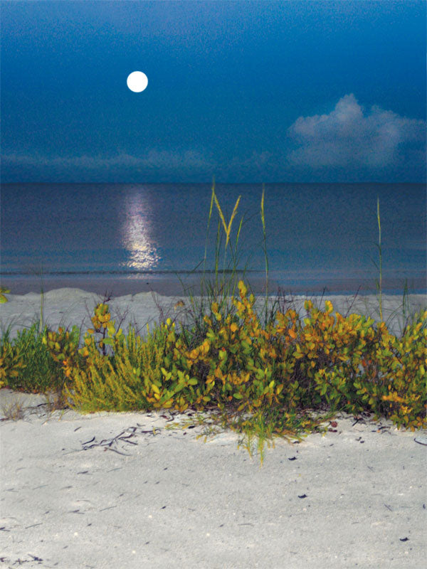 Moonlit Beach Printed Photography Backdrop