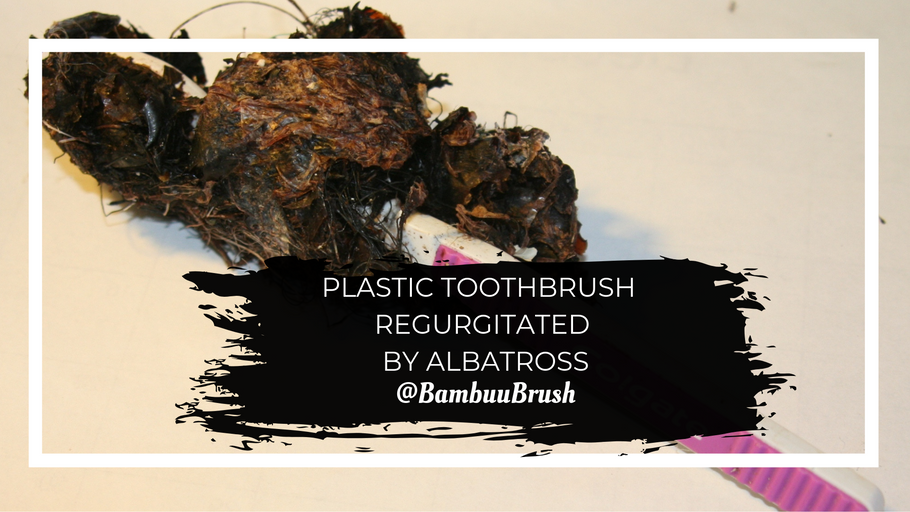 Plastic toothbrush regurgitated by Albatross - Why we need to swap!