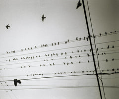 Birds on the Wire with Shoe