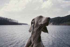 The Best Places to Take Your Dog