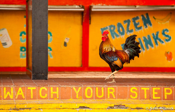 Rooster Crossing, Key West, Florida