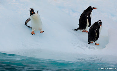 Can't Swim, Antarctica