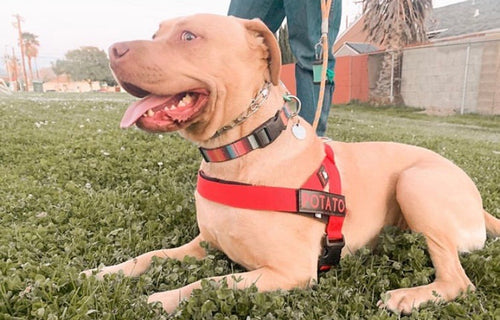 Adjustable Dog Harness- Fire Truck Red - thebullhug.com