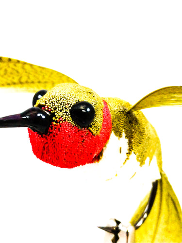 Hummingbird fly