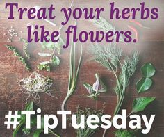 Treat Your Herbs Like Flowers