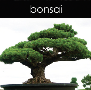 Bonsai Candle