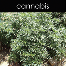 Load image into Gallery viewer, Cannabis Fragrance Oil