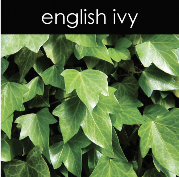 English Ivy Candle