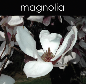 Magnolia Fragrance Oil