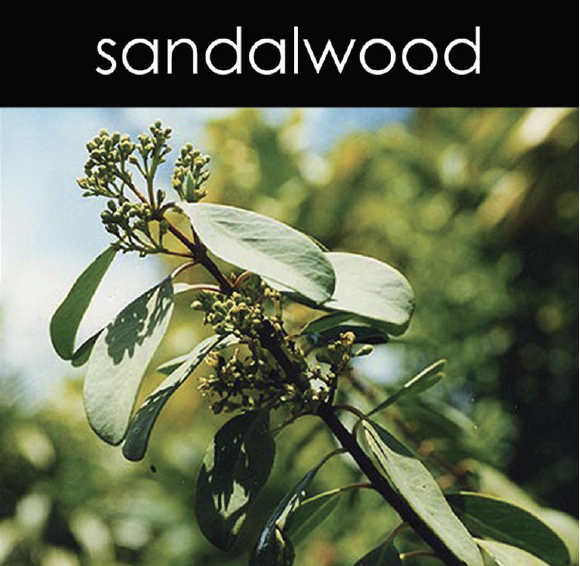 Sandlewood Fragrance Oil