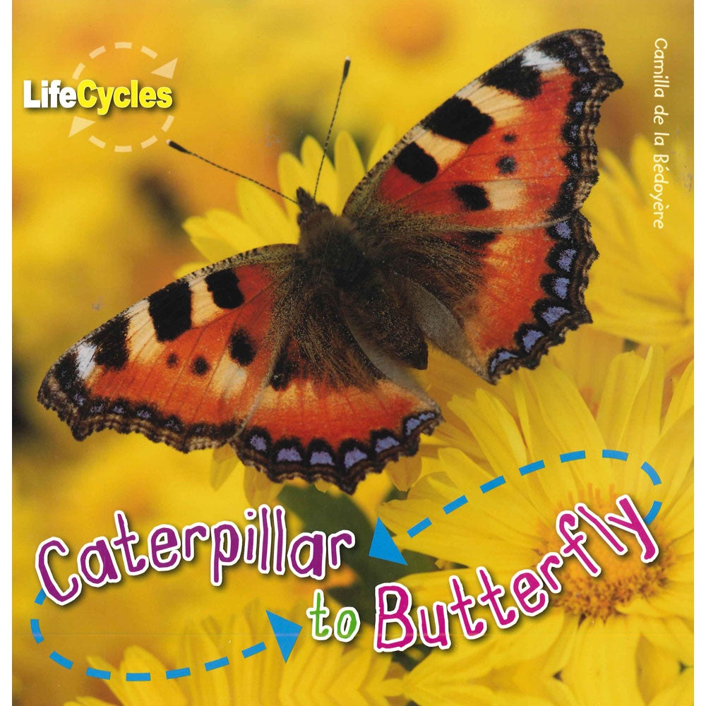 Life Cycles - Caterpillar to Butterfly