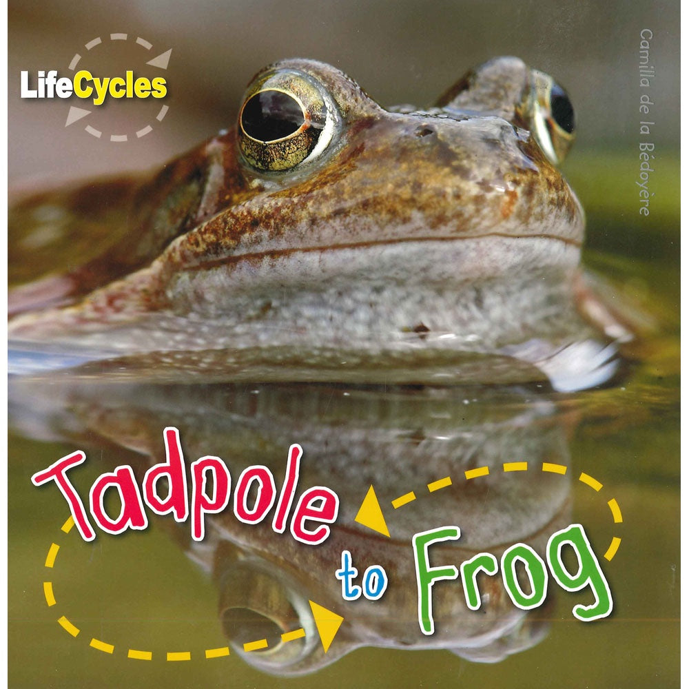 Life Cycles - Tadpole to Frog