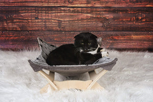 Cat Hammock with Stand - Paws One