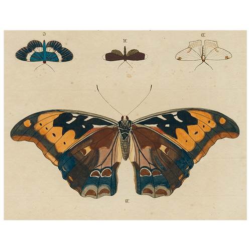 Brown Butterfly B (p 26)