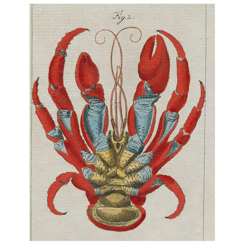 Lobster Bottom (p 36)