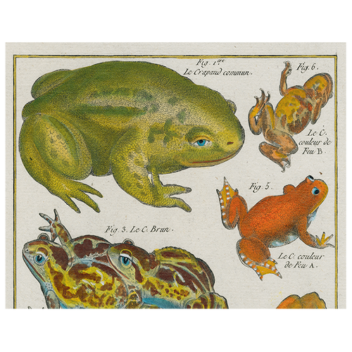 Frogs (p 39)
