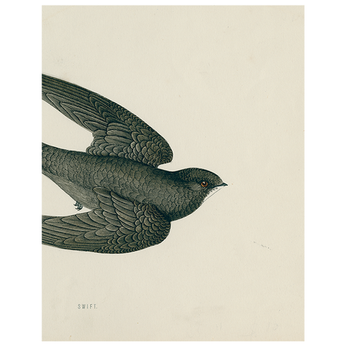 Swift Bird (Swallow) (p 46)