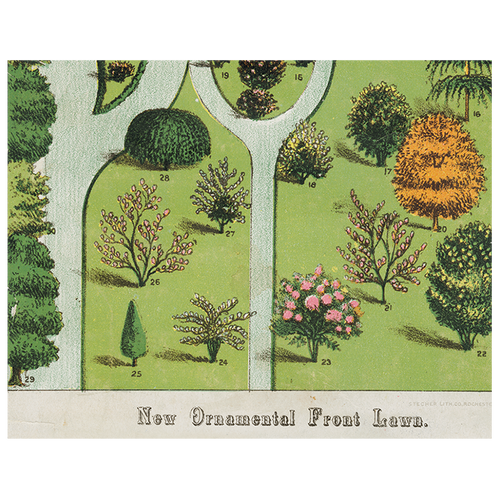 Ornamental Trees (p 60)