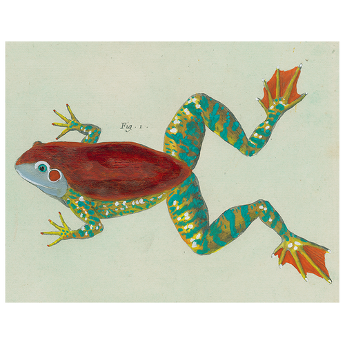 Frog (p 73)