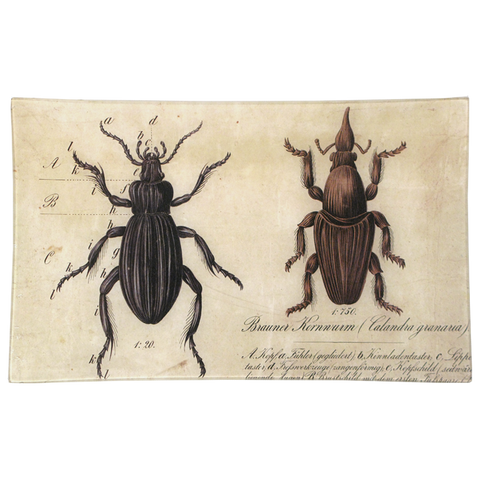 Brown Insects (2 Varieties)