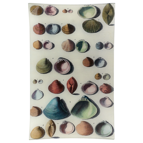 Chart of Small Shells